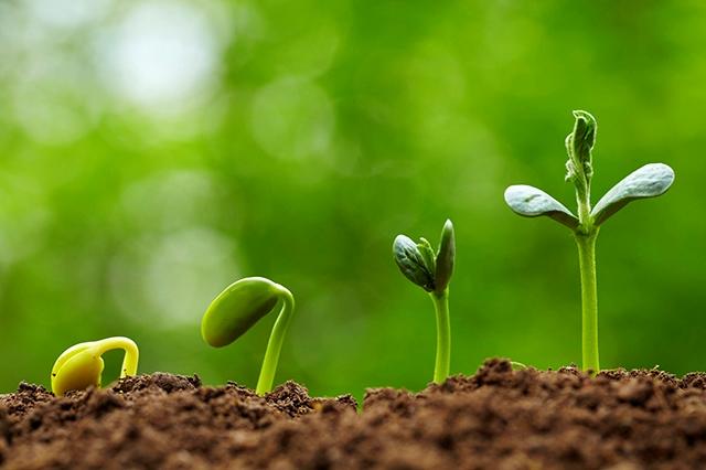 UNP Initiatives 2021: Strategic Environmental Assessment of Community Development